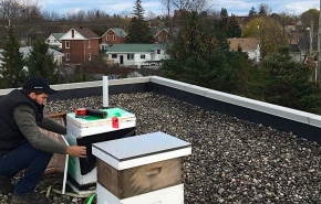 Rooftop Beekeeping Trending in Smiths Falls and Kanata