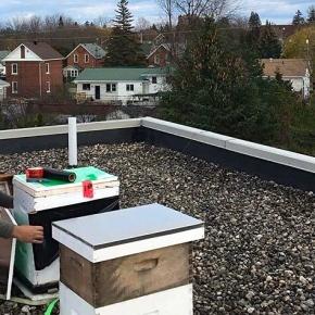 Rooftop Beekeeping Trending in Smiths Falls andKanata